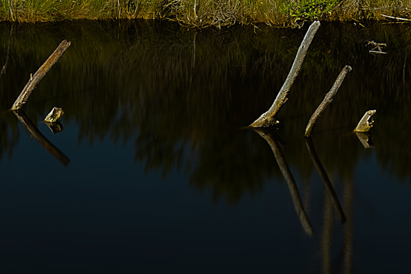 Fine Art Photographs of Assateague Island Reflections by Michael Pucciarelli