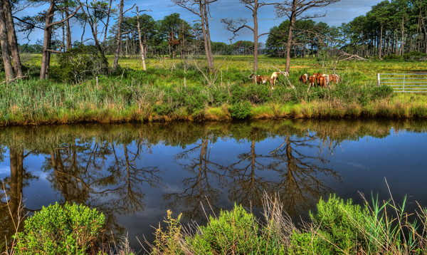 Reflections of Assateague