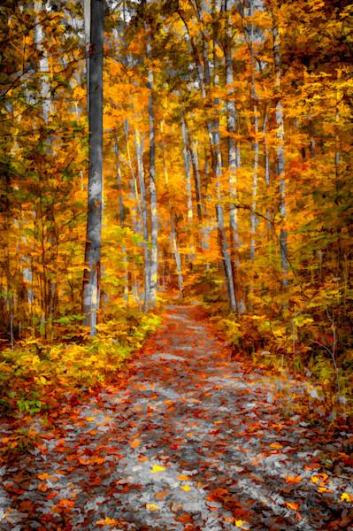 Ohiopyle Trail Fine Art Photograph | JustBob Images