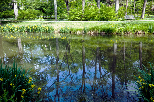 Reflections of Brookside Gardens