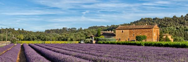 Lavender - Rousillon - France