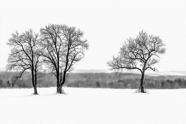Snow fall on the trees
