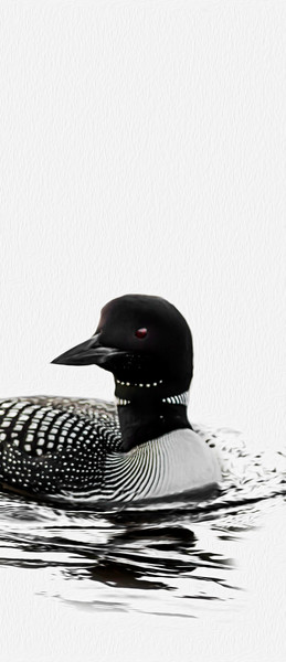 common loon minimalist photograph by Ed Williams photographer