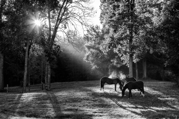 morning-chill-black-and-white