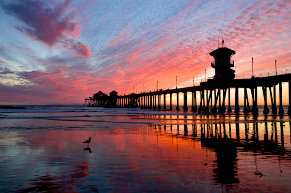 Awesome Sunset Print of Huntington Beach Pier and Gull