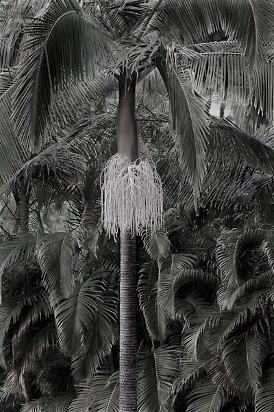 Anniversary Palm