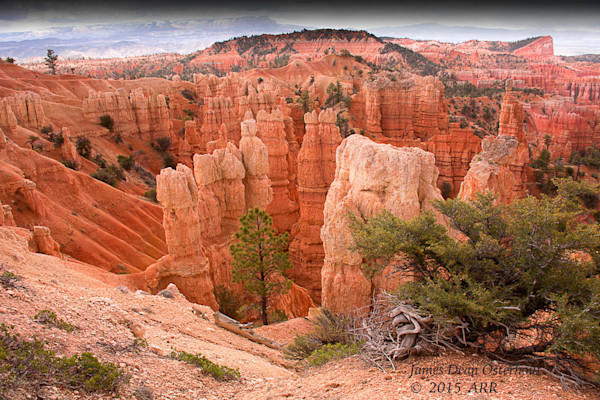 Southwest,desert,Arizona ,Utah