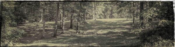 Behind Greenwood - Summer
