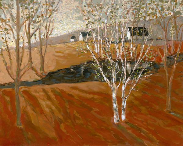 Birch Tree Pond