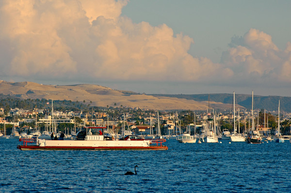Awesome Photograph of the Balboa Ferry with Rupert the Black Swan.