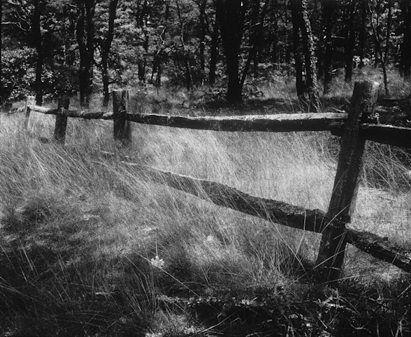 Old Fence - B&W