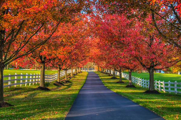 Lane in Fall Fine Art Photograph | JustBob Images