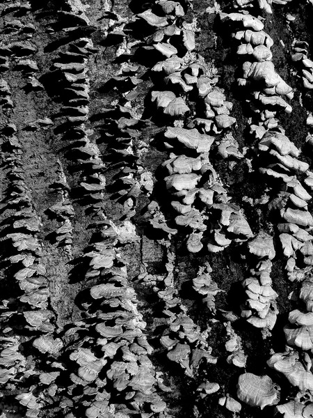 Fungus and Bark