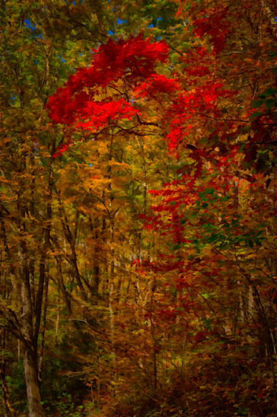 Roaring Fork Color Fine Art Photograph | JustBob Images