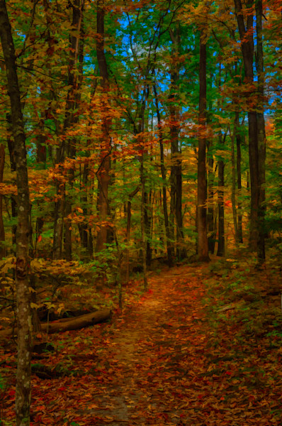 Roaring Fork Trail Fine Art Photograph | JustBob Images