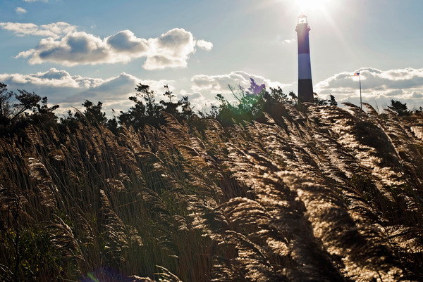 Fire Island Lighthouse Seagrass