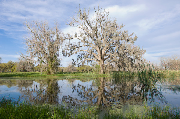 Columbia Ranch, Brazoria County, Damon, Texas; reflections in the slough behind the main house in the late afternoon