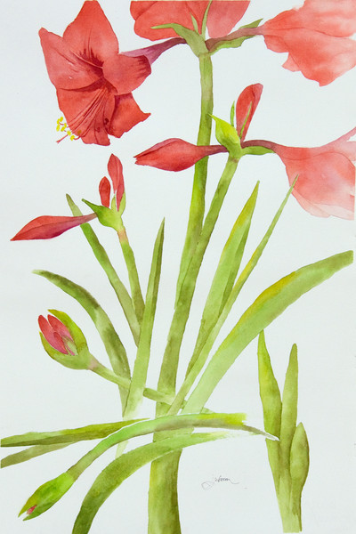 Prints of Watercolor Art by Judy Johnson at Prophetics Gallery