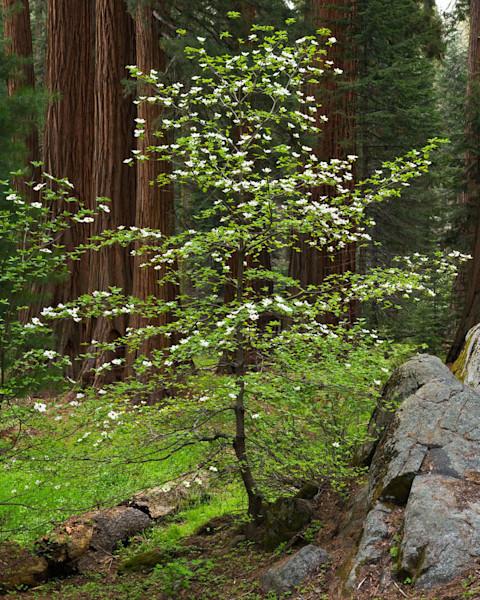Forest Elegence
