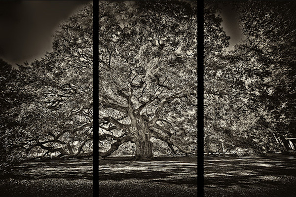 Angel Oak - Trip Tych