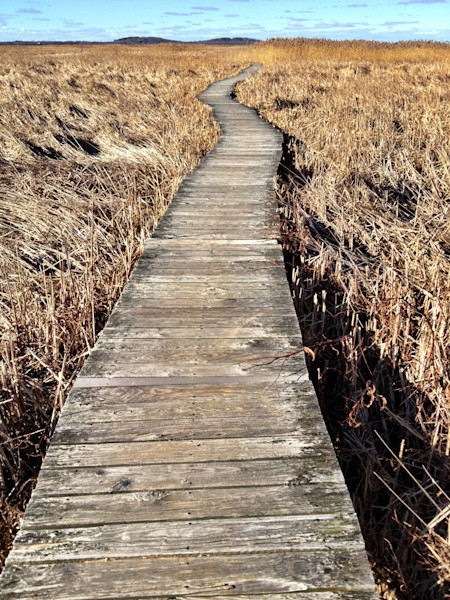 Boardwalk Marsh Plum Island