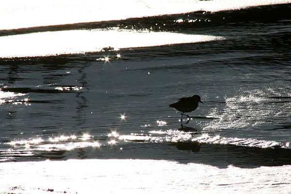 sand piper beach sunset