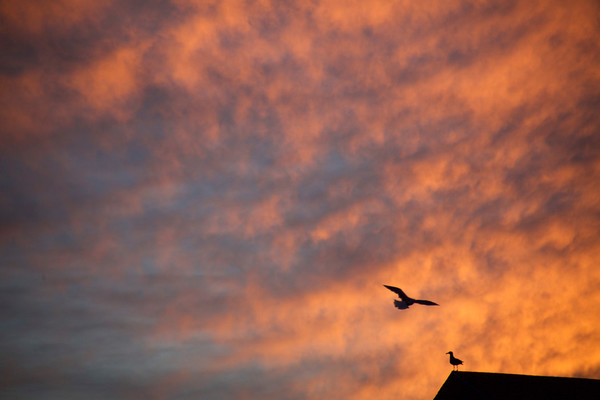 sunset sky clouds gull