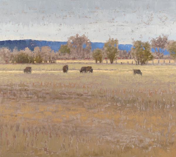 Blue Mountain Cows
