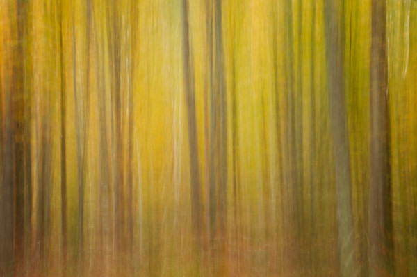 Birch Tree Swipe #3 Fine Art Photograph | JustBob Images