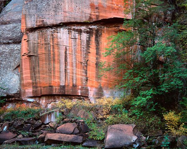 Nature-'s Mural