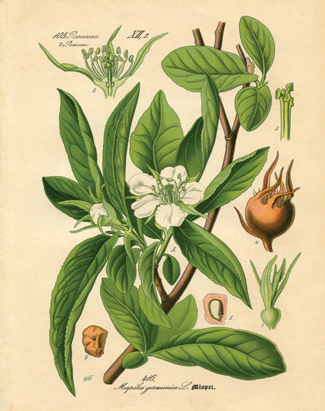 Botanical I