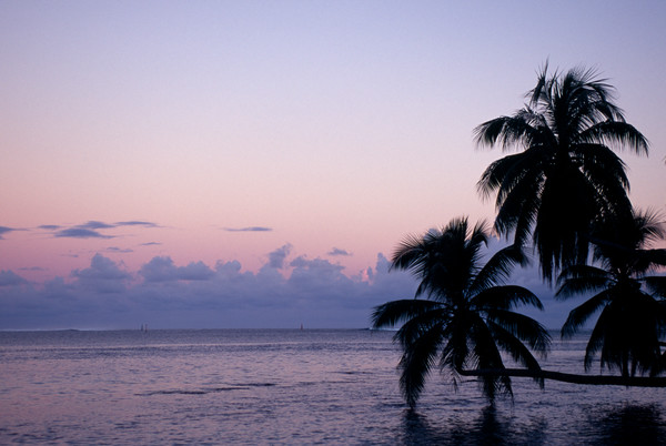 Opunohu Bay, Moorea, French Polynesia; sunrise views of Opunohu Bay with palm trees stretched out over the water