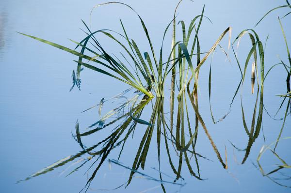 Reed Reflections, Damon, Texas