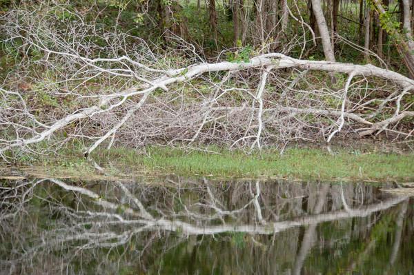 Dead Tree Reflection, Damon, Texas
