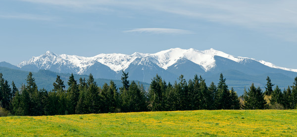 Olympic Mountain Range Pano, Sequim, Washington