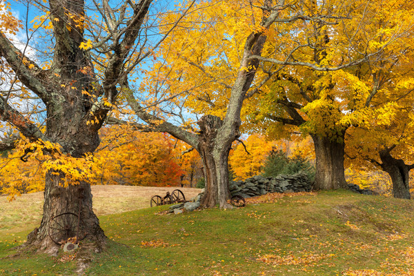 Vermont's Essential Elements/A rural creative autumn landscape photography artwork by Tom Schoeller