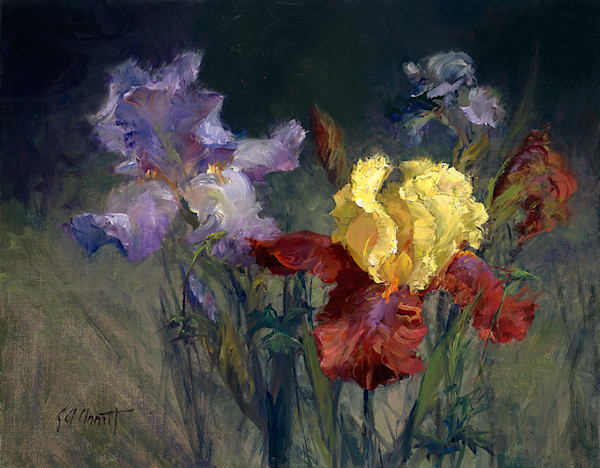Golden Claret Iris, Joe Anna Arnett