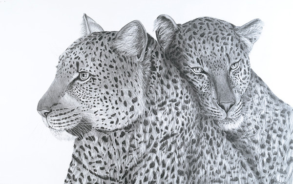 Leopards in Love
