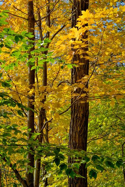 Autumn Peak 4