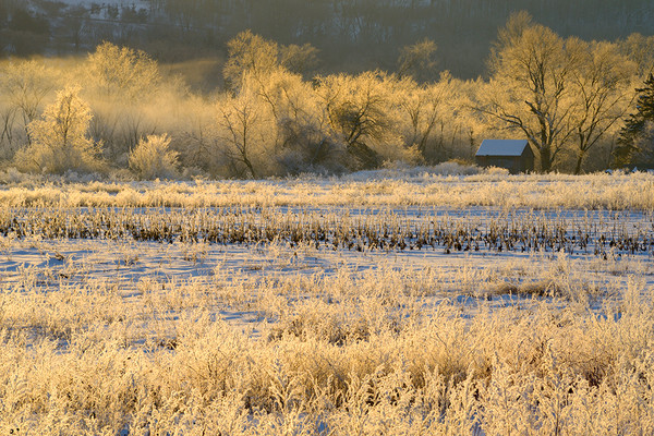 Morning Frost 2