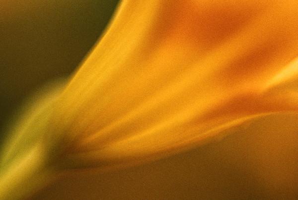 Sunrise Flame