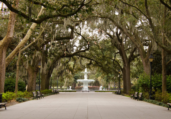 Savannah Photographs for Sale as Fine Art