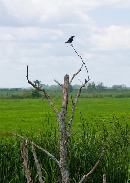 Scarecrow Tree