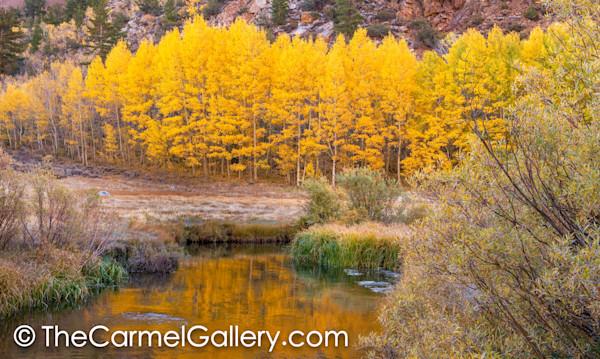 Autumn Reflections, Mono Lake