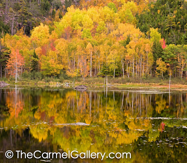 Beaver Pond Reflections