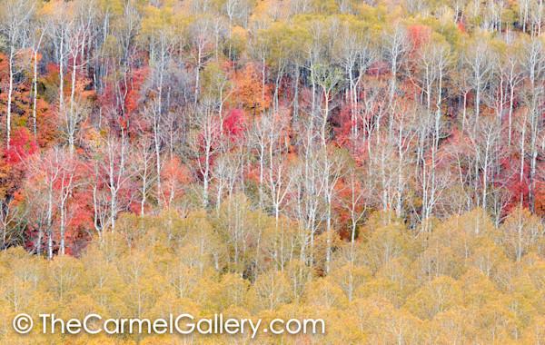 Autumn's Grace