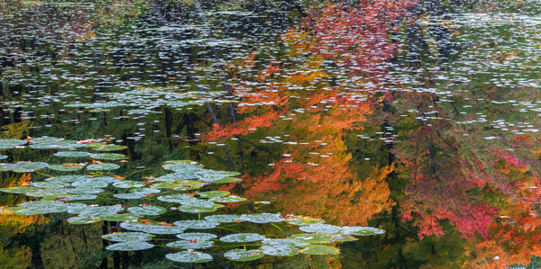Autumn in New England pond reflection fine art photography prints/Enjoy the tranquility all year long purchase nature prints by artist Tom Schoeller