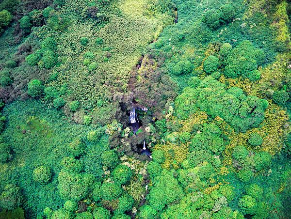 Maui Rain Forest