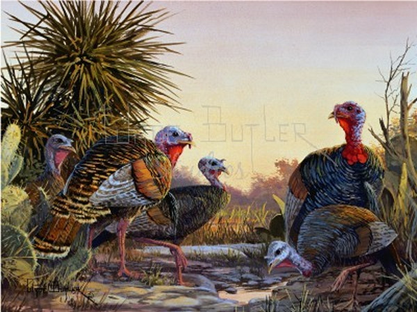 Texas Wildlife Art and Paintings For Sale