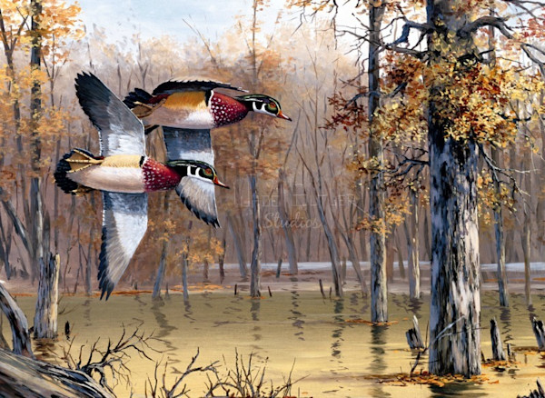 Waterfowl Art and Paintings For Sale